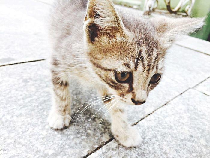 Cat♡ Cat