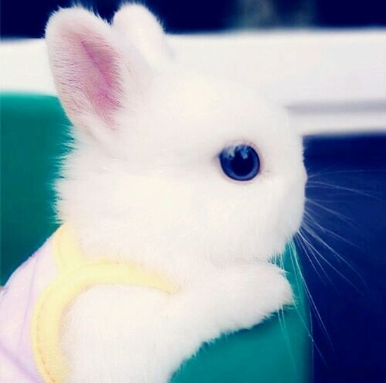 Soulfuel Little Bunny Foo Foo My Sweet Heart Gods Beauty All Creatures Great And SmallAll Creatures Great And Small