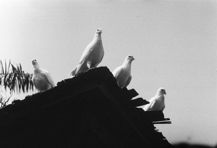 五,一节。6M05 x Leica M6 x ILFORD400。 Blackandwhite Canton Vscocam Streetphoto_bw Street Photography Streetphotography B&w China Filmisnotdead Film Leica M6