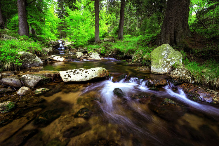 Forest Water Tree Plant Rock Land Motion Solid Rock - Object Scenics - Nature Nature Flowing Water Beauty In Nature Blurred Motion Tranquility Downloading Tranquil Scene Long Exposure Stream - Flowing Water No People Flowing Outdoors WoodLand Rainforest