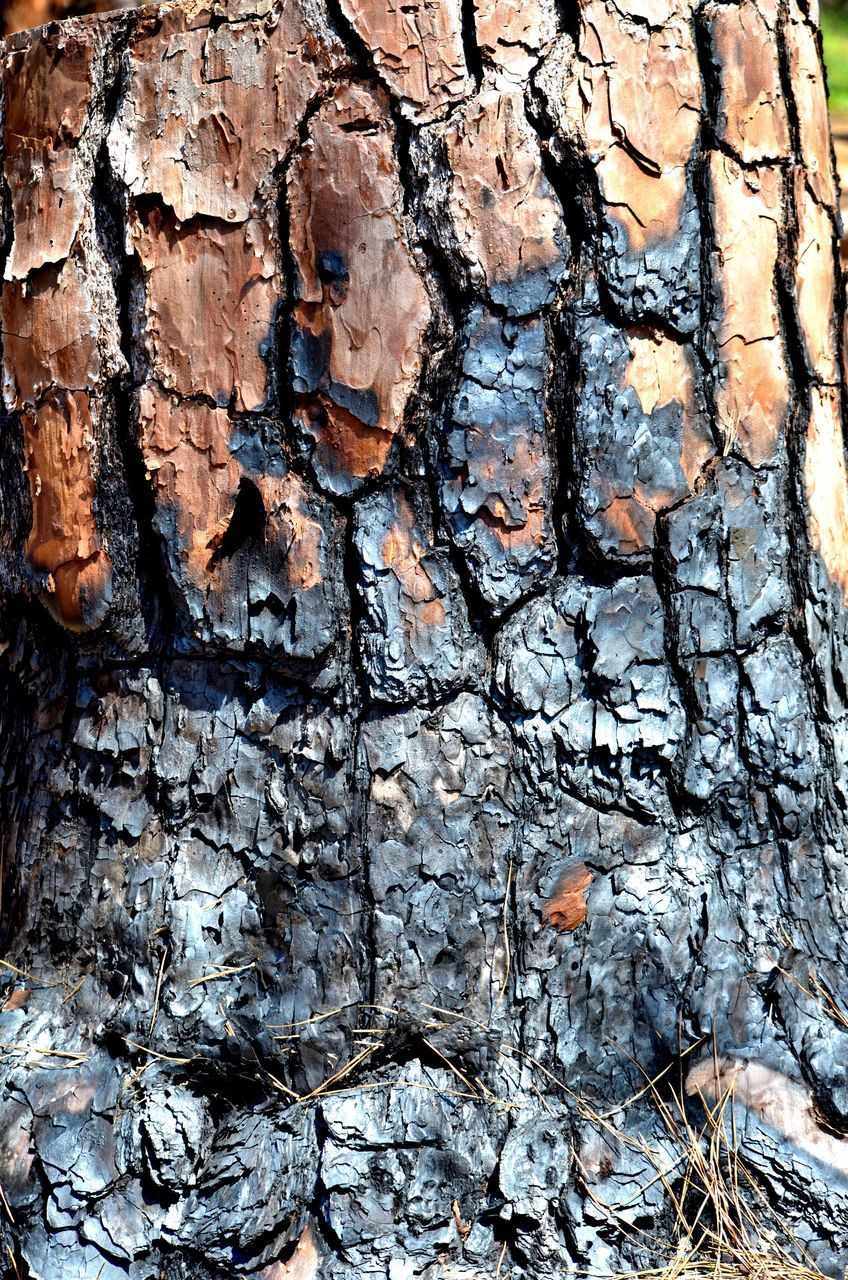 textured, full frame, backgrounds, close-up, no people, built structure, day, tree, outdoors