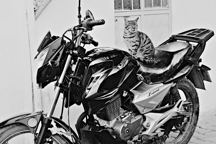 Cat Motorcycle Cat Lovers Catofeyem Close-up Built Structure