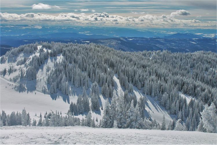 Glades Shredding The Gnar Snowboarding Top Of The World Backcountry Freeriding Go Higher Landscape Mountain Snow Snowcapped Mountain
