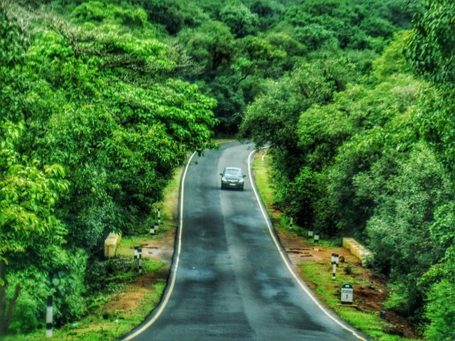 Everything is brighter with you by my side. Beautifullight Beauty In Nature Day Drives EyeEmNewHere Forest Green Green Green Green!  Loveforphotography Naturallightphotography Nature Nature Nature_collection Nature_perfection NatureAtItsBest Outdoors Plant Road Roads Roadtrip Slope The Way Forward Transportation Tree Upwards