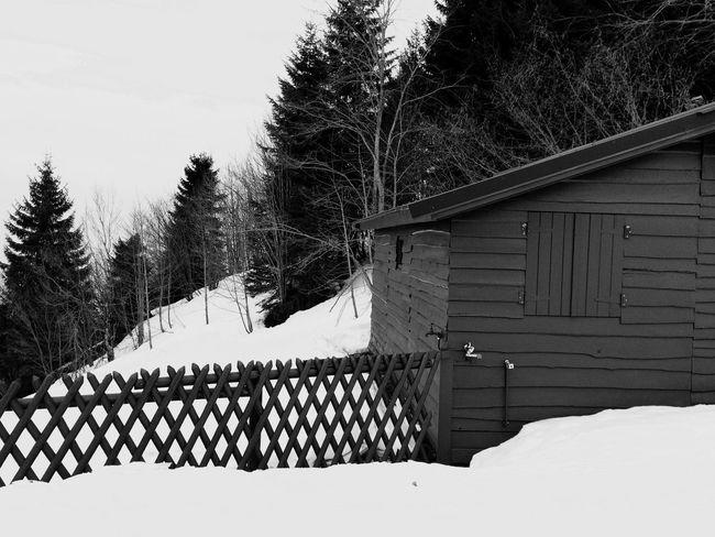 Walking Around Relaxing Hello World Landscape Snow