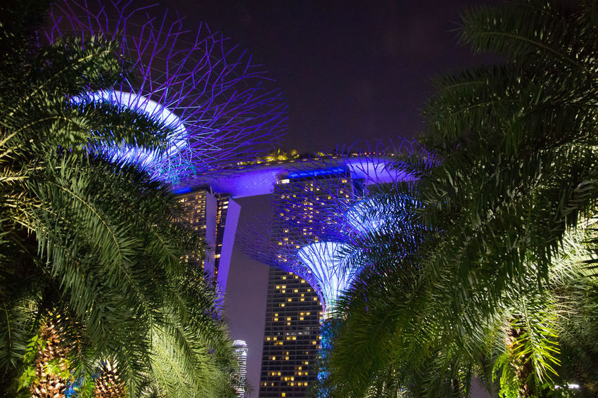 Gardens By The Bay Marina Bay Sands Architecture Building Exterior Built Structure Celebration Celebration Event City Decoration Event Glowing Illuminated Light Lighting Equipment Low Angle View Nature Night No People Office Building Exterior Outdoors Plant Purple Sky Skyscraper Tree