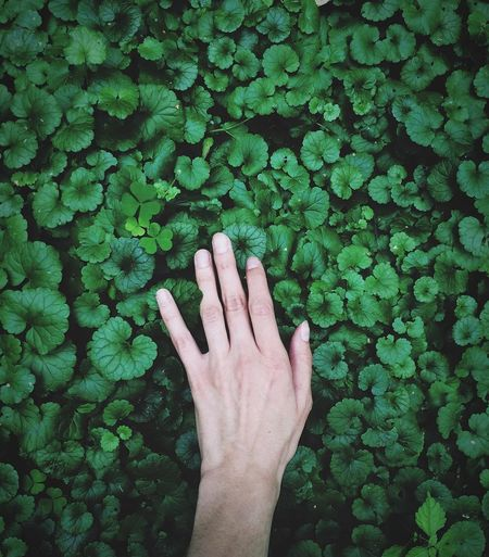 Shadows ShotOnIphone Minimalism Nature Grass Human Body Part Human Hand Real People One Person Hand Green Color Personal Perspective Body Part Day Nature Human Finger Finger Touching Plant Unrecognizable Person Growth Close-up Lifestyles Outdoors