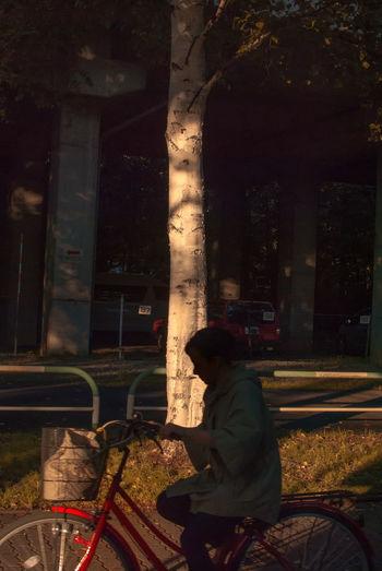 One Person Outdoors People Real People Setting Sun Sitting Treein Sapporo,Hokkaido,Japan The Street Photographer - 2017 EyeEm Awards