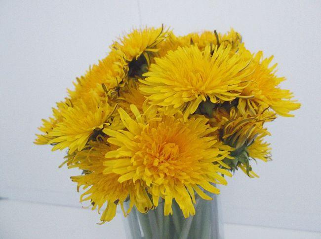 Hi! Relaxing Taking Photos Enjoying Life Flowers Macro Colors Yellow Flower Yellow Flower Dandelion Yellow Dandellion Bouquet Posy Flavour Spring Spring Flowers