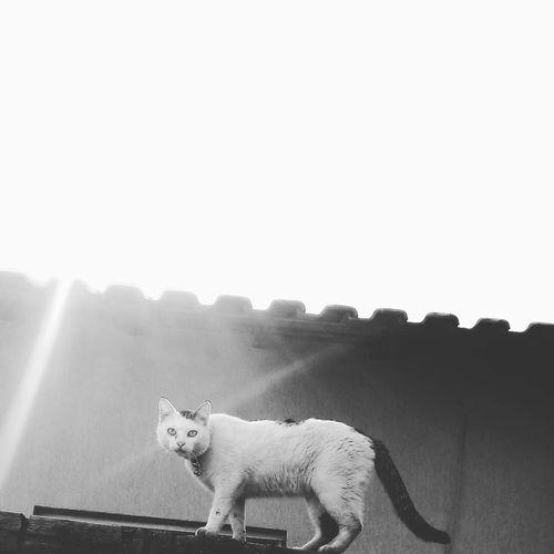 Cat♡ Cats