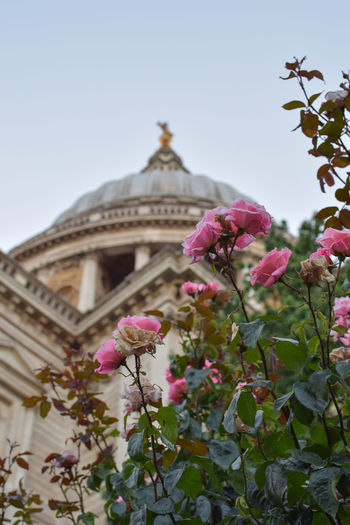Low-angle view of St. Paul's Cathedral City City Of London London Saint Paul's Cathedral Spirituality Travel Architecture Building Exterior Built Structure Clear Sky Dusk Flowers History Landmark Low Angle View Nature No People Outdoors Plant Sky Summer Travel Destinations Wallpaper