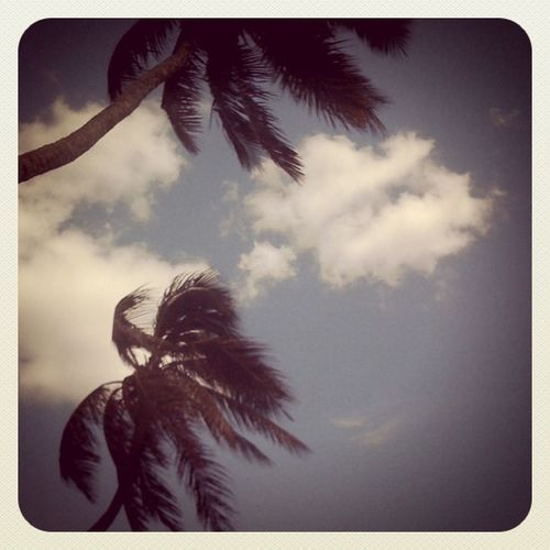 Nothingbutasimple3g Clouds Palmtree Iphonegraphy