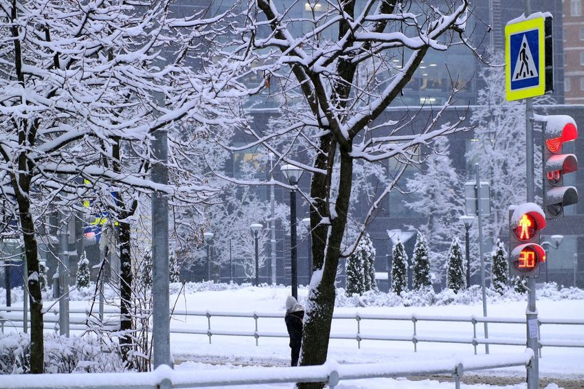 Snowy morning in the city Snow ❄ Trees WeekOnEyeEm Beauty In Nature Building Exterior City Cold Temperature Day Fencing Lamppost Nature No People Outdoors Scenics Snow Snow Covered Trees Snow Morning Snowing Street Photography Street Sign Traffic Lights Tranquility Tree White Color Winter