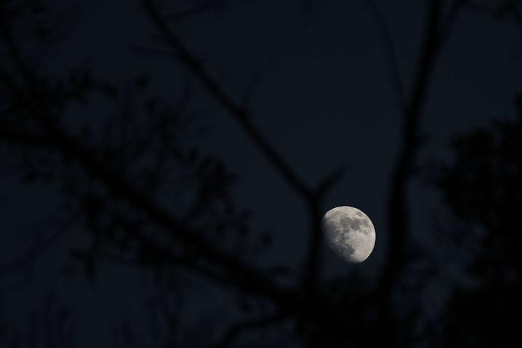 Sphere Moon