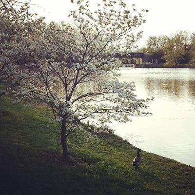 Another lovely evening at Nathaniel Greene Park. Springfieldmoparks Springfieldmo Spring