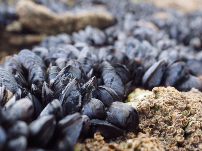High Angle View Of Mussels On Shore