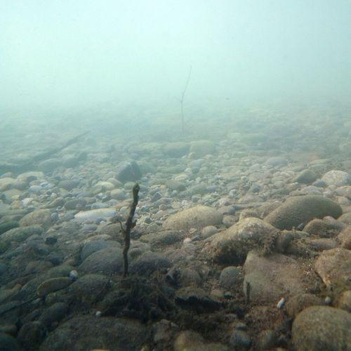 underwater landscape Underwatwer Fotography Underwater Landscape UnderSea Underwater Sea Sea Life Coral Ocean Floor Seaweed Ecosystem