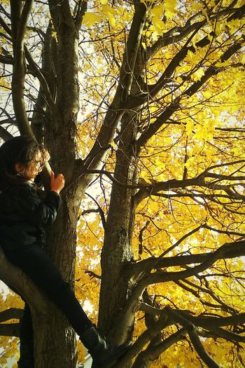 Light And Reflection dream high Tree Low Angle View Branch Climbing Nature Outdoors Beauty In Nature One Person Day Fallhighfall
