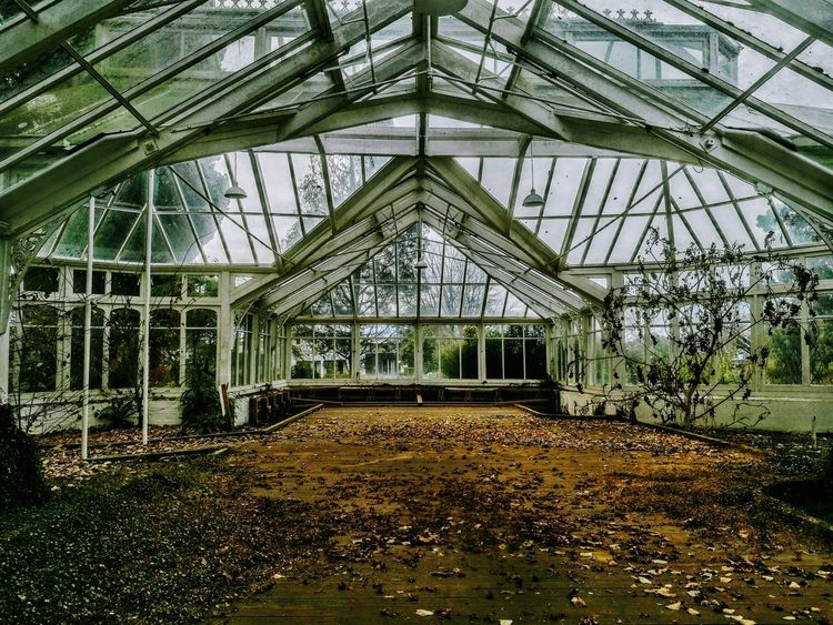 A building left derelict from earthquakesLeft Indoors No People Architecture Built Structure Greenhouse Sky Christchurchnz Christchurch New Zealand Canterbury New Zealand EyeEmNewHere Nature Abandoned Buildings Abandoned Abandoned Places Mona Vale Autumn Leaves Winter Vibes