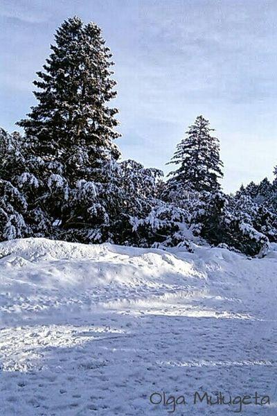 Winter Nice Views Winter Trees