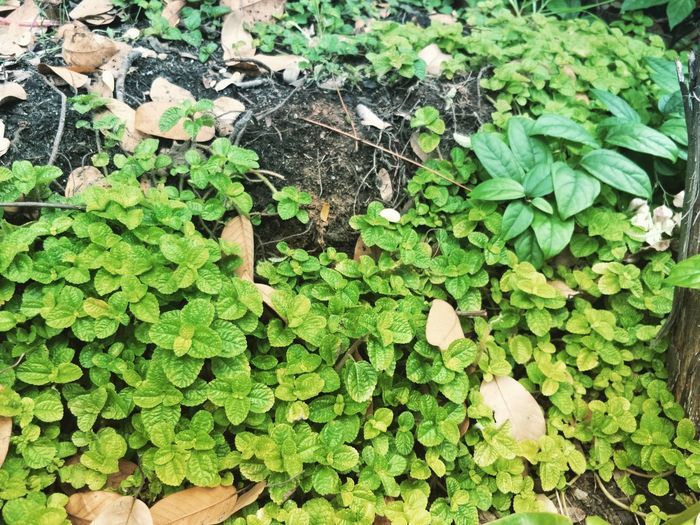 Green Collection Green Color Leaf Growth Plant Plant Part Nature Day