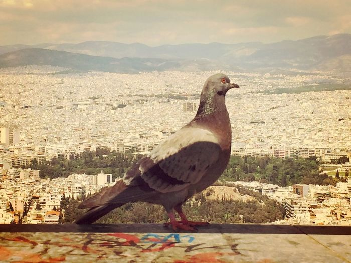 Animal Themes Animals In The Wild Architecture Bird City City Life Cityscape Close-up Day Flying Free Freedom Nature No People One Animal Outdoors Peace Perching Readytofly Retaining Wall Sky Sunlight The Street Photographer - 2017 EyeEm Awards