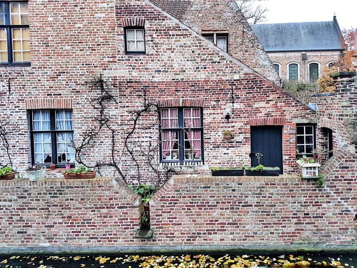 Pattern Bricks Tree Window Wall Building Exterior Architecture Built Structure Outdoors Window House Ivy Day
