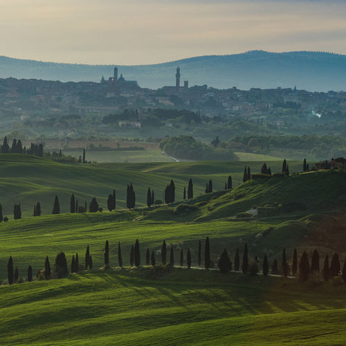 Toscana Agriculture Beauty In Nature Day Environment Field Grass Green Color Idyllic Land Landscape Mountain Nature No People Outdoors Plant Rolling Landscape Rural Scene Scenics - Nature Siena Sky Tranquil Scene Tranquility Tree