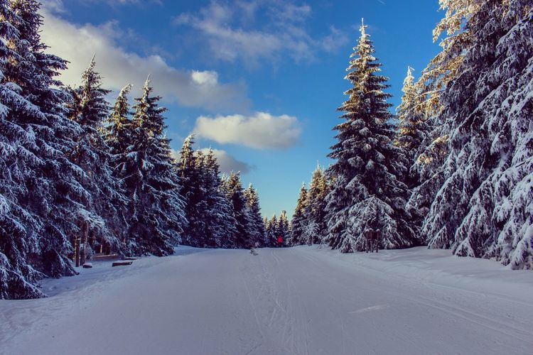 Winterwonderland | Oliver Hlavaty Photographie • © 2015-18 Oliverhlavatyphotographie Oliverhlavaty Winterwonderland Rennsteig Germany Deutschland Thuringia Thuringen Oberhof Snow Winter Cold Temperature Sky Tree Nature Cloud - Sky Road Outdoors Beauty In Nature The Way Forward No People Day Scenics Landscape EyeEmNewHere