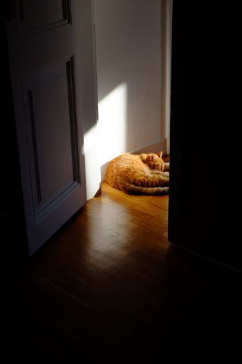 Sunbeams and cats Light And Shadow Nap Cat Lovers Cat Sunlight Sunbeam Cat