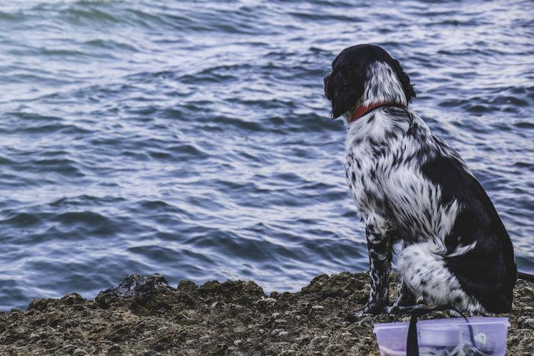 Fishing dog One