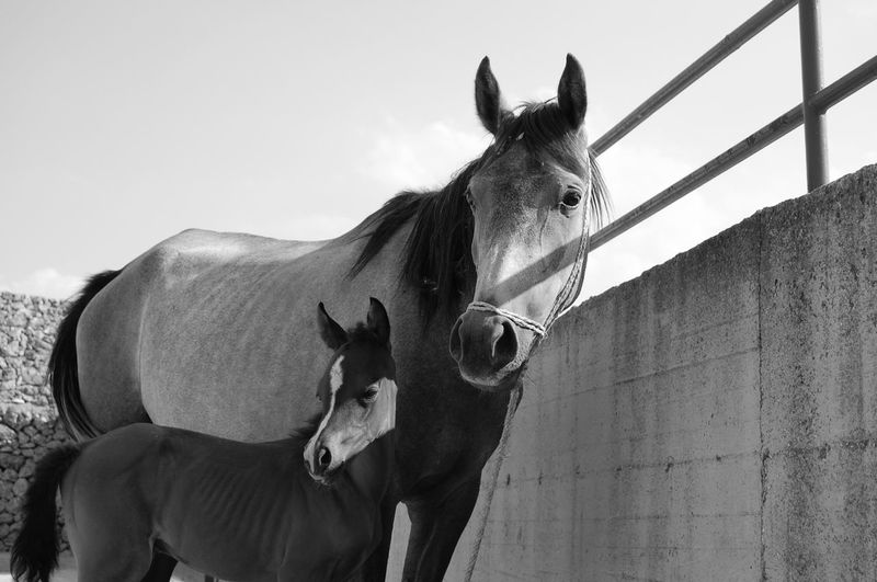 Horse and foal standing against sky