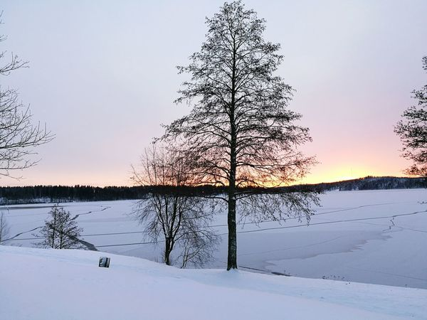 Finland♥ Finland Savonlinna Finland Water Lake Sunset Landscape Nature Tree Reflection Scenics Outdoors Wilderness Animal Wildlife No People Wetland Cold Temperature Sky Extreme Weather Beauty In Nature Day Christmas Lights Reflection Beauty In Nature Nature Tree