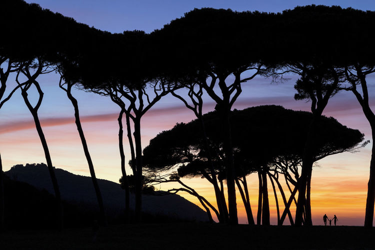 Pines and family silhouette at sunset in Tuscany People Silhouettes Sunset Clouds Colors Canvas Holidays Solitary Yellow Red Tuscany Italy Countryside Lights Shadows Trees Summer Nature Family Child Pines Tree Tree Sunset Silhouette Sky Landscape