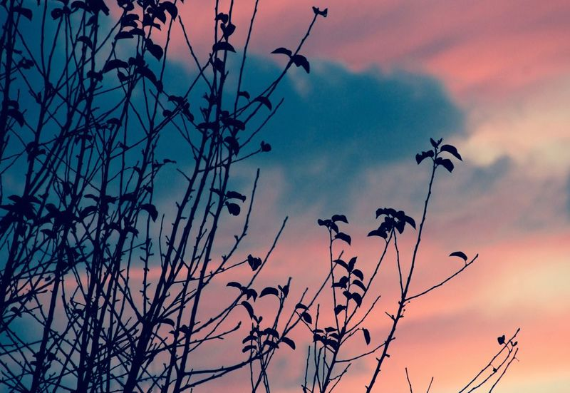 Atmosphere Atmospheric Mood Bare Tree Branch Ciel Coucher De Soleil Dead Plant Light Low Angle View Majestic Nature Nuages Outdoors Relaxing Rêve Sky Tranquil Scene Tranquility Tree
