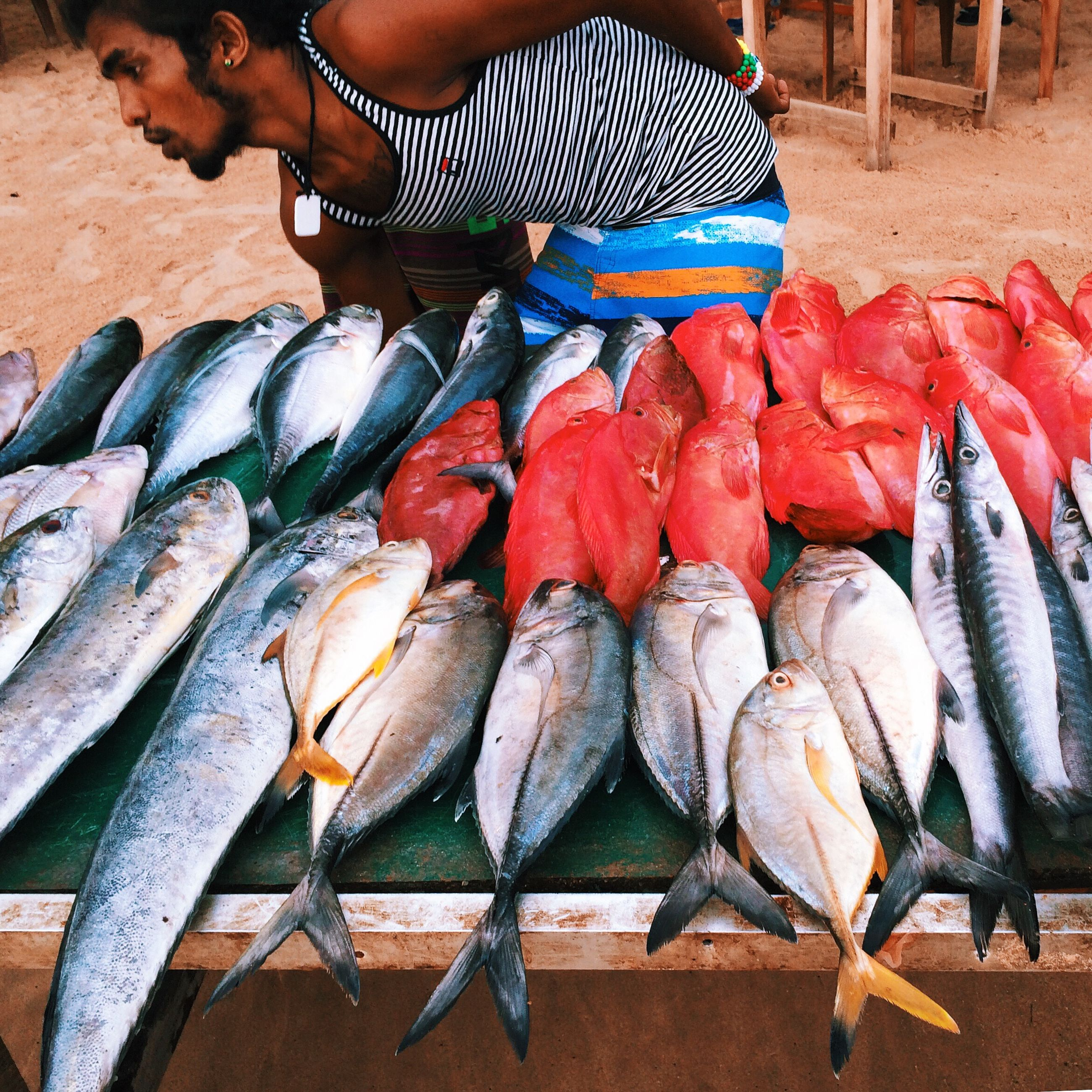 fish, food, food and drink, healthy eating, animal themes, abundance, seafood, dead animal, raw food, large group of objects, market, market stall, retail, high angle view, for sale, animals in the wild, variation, outdoors, one person