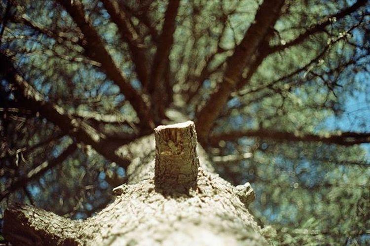 analogic mode Analogicphotograph Ricoh Retro Nature Vintage View Peacefulness Green Trees Nature