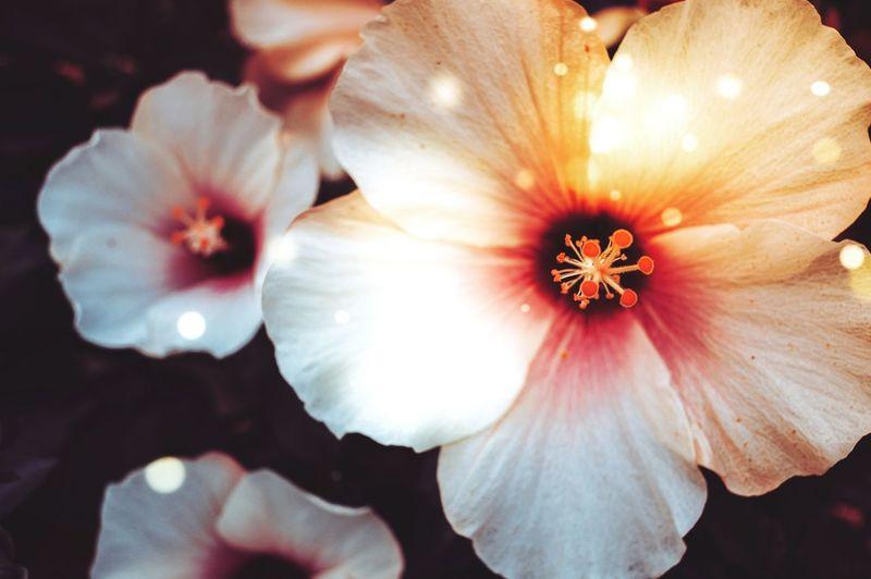 MAGICAL| Flower Flower Head Beauty In Nature Fragility Nature Close-up Blossom Freshness Growth Outdoors Summer Light Beauty EyeEm Best Edits EyeEm Nature Lover EyeEm Gallery The Week On EyeEm Colours EyeEmBestPics EyeEm Best Shots Nature_collection Contrast Drastic Edit
