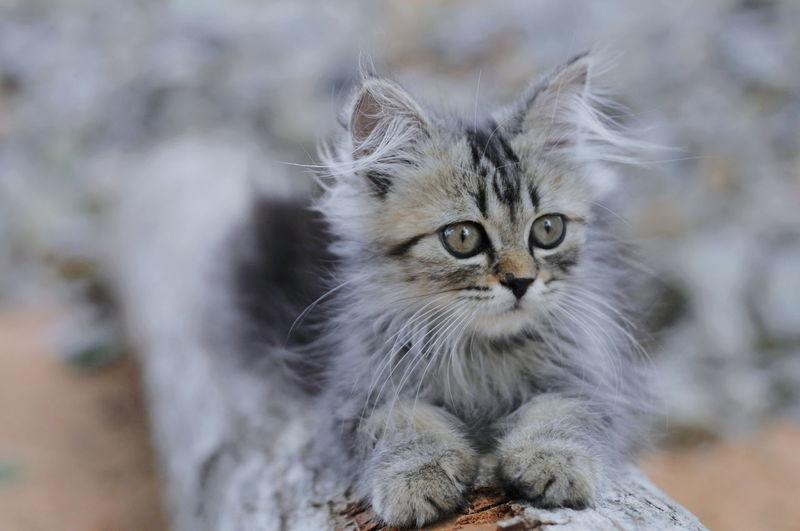 Portrait of kitten by cat outdoors