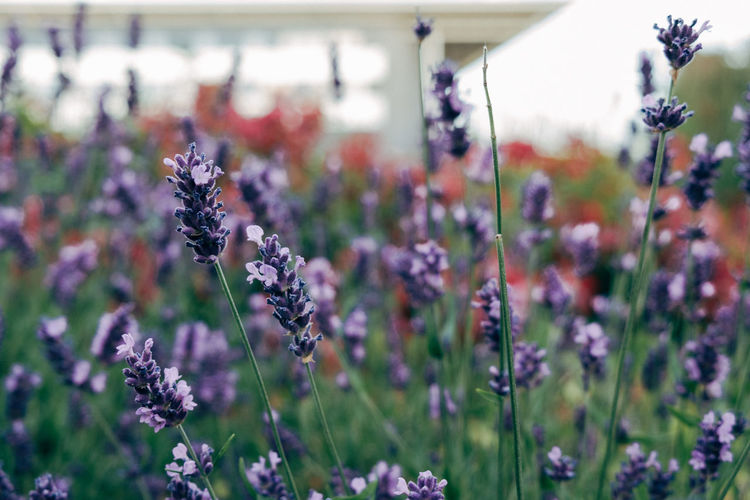 Colors Film Nature Plant Beauty In Nature Flower Flowering Plant Fujifilm Grain Petal Summer