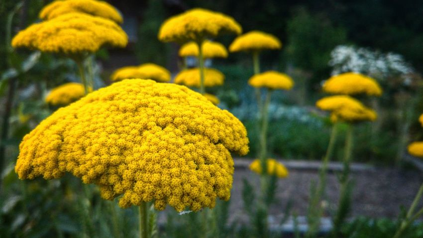 Flower Yellow Nature Plant Beauty In Nature Focus On Foreground Growth Close-up No People Fragility Outdoors Flower Head Day Freshness Paint The Town Yellow