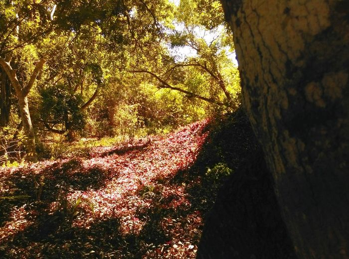 Purple hill. Just Around The Corner Nature Afternoon In The Forest Florida Light And Shadow Plants Forest For The Trees