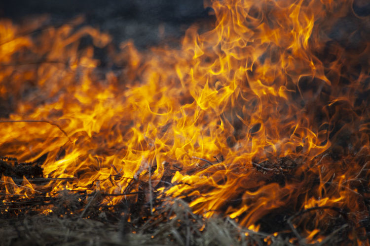 Dry grass is burning. fire in the field in spring. burning dead wood over a large area.