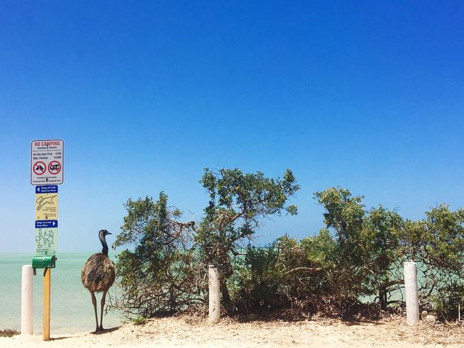 Emu by the beach Water Signs Beach Model Australia Western Australia Emu Animal Themes Day Clear Sky Copy Space Animals In The Wild Nature Tree Outdoors Animal Wildlife Mammal Blue Standing Beauty In Nature Safari Animals Sky EyeEmNewHere