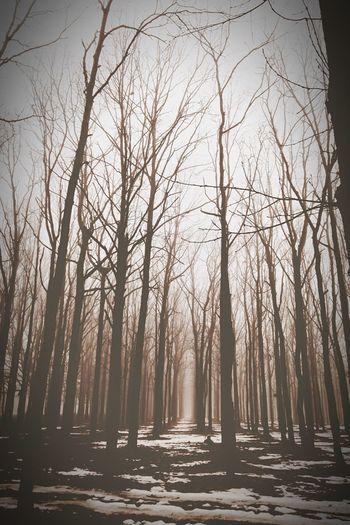 """""""Интересно, - подумал ежик, - если лошадь ляжет спать, она захлебнется в тумане? """" Юля,я продолжу?😉 Popular Photos Landscape Photography EyeEm Best Shots EyeEm Best Edits Melancholic Landscapes EyeEm Best Shots - Nature Monochrome Monochrome_Monday"""