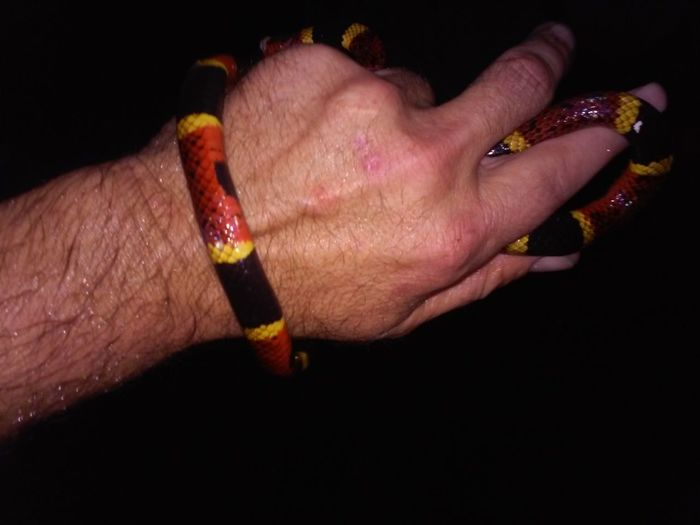 real stupid of me Human Hand Black Background Close-up Deadly Coral Snake But He Was So Cute