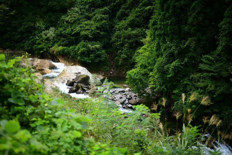 やたらと、虻が多い。 Trekking Plant Green Color Tree Growth No People Nature Beauty In Nature Lush Foliage Outdoors Scenics - Nature Tranquil Scene Water Tranquility Solid Forest Land Day Rock Foliage