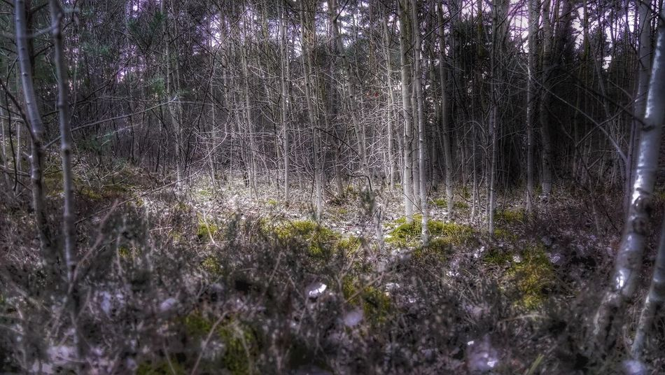 In The Woods Treescollection Nature EyeEm Best Edits Nature Makes Me Smile Nature Harmony EyeEm Best Shots Enjoying The View Check This Out Nature On Your Doorstep Winter Trees HDR No Edit No Fun Hdr_Collection Light Trough The Trees Light And Shadow Mystic Nature Photography