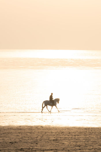 Silhouette horse on beach against sky during sunset