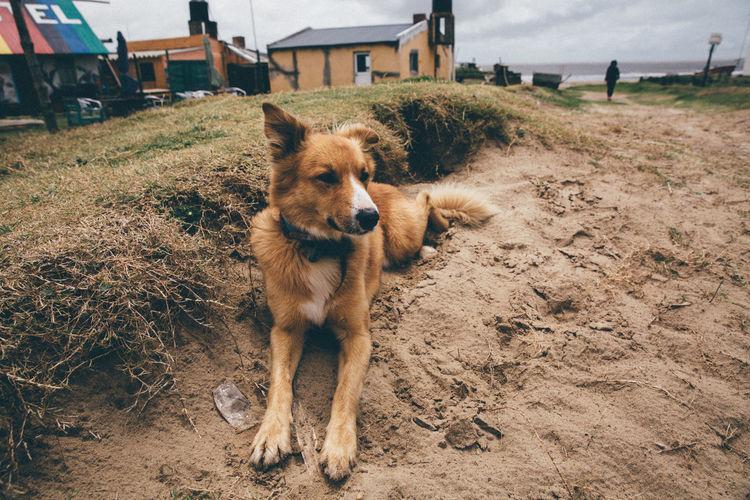 Beach Cabopolonio Dog Dogs Friendship Nature Remote Location Sealife